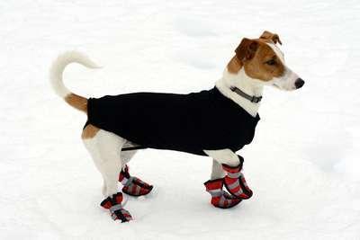 doggie shoes